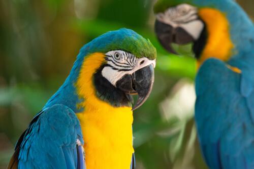 Seguro de aves: ¿por qué y cómo asegurarlas?