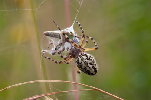 3 técnicas de caza de las arañas