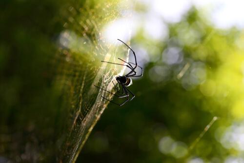 Las 3 técnicas de caza de las arañas