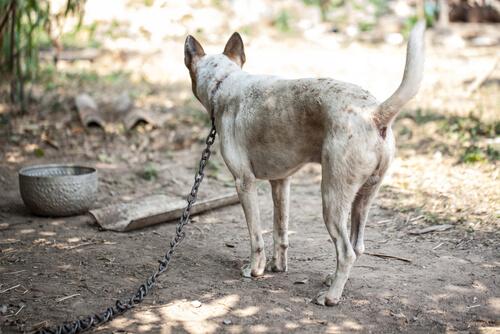 ¿Es bueno tener al perro atado?