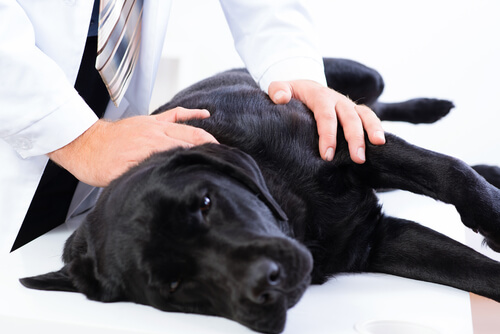 Auxilio a perros