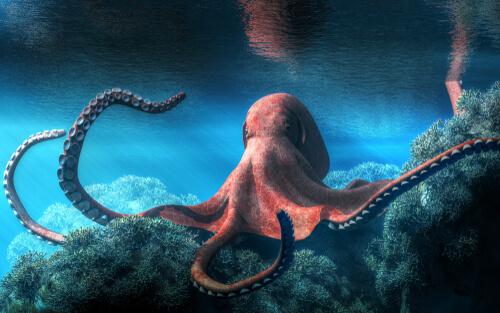 ¿Qué sabes sobre los cefalópodos?