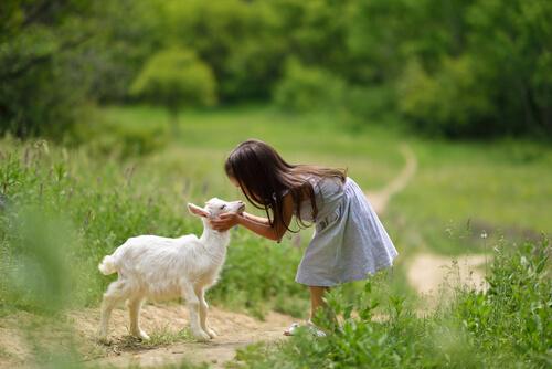4 cosas que debes saber para cuidar cabras