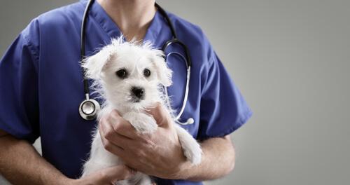 Razones para denunciar a un veterinario