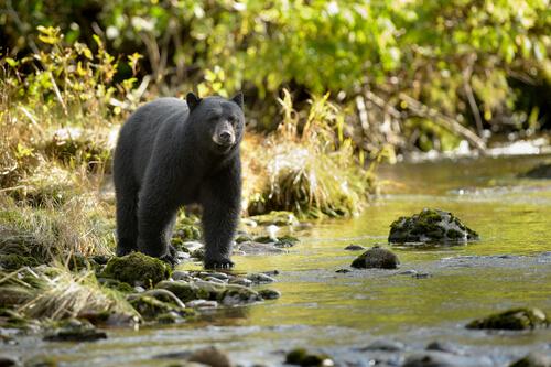 El disparo a un oso por culpa de que los turistas lo alimentaban