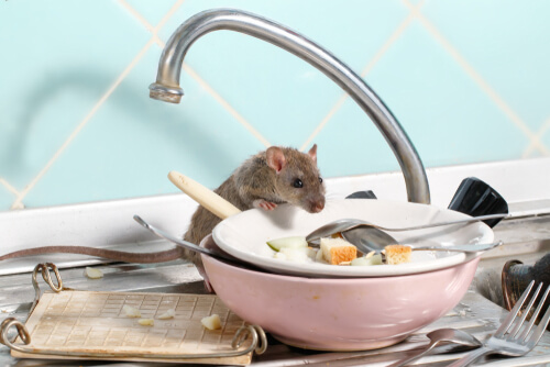 Enfermedades transmitidas por roedores