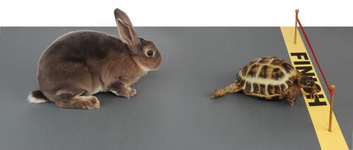 Fábula de la libre y la tortuga