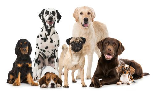 Principales federaciones caninas
