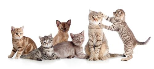 Principales federaciones felinas