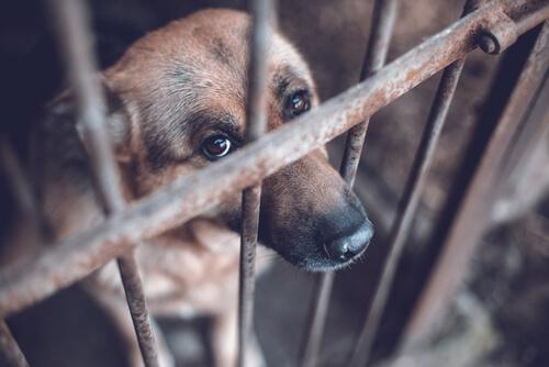 Maltrato en las protectoras de animales