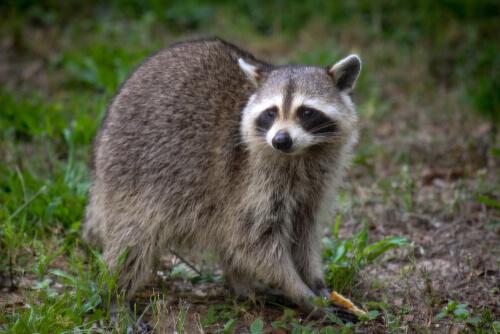 ¿Qué mascotas son legales en España?