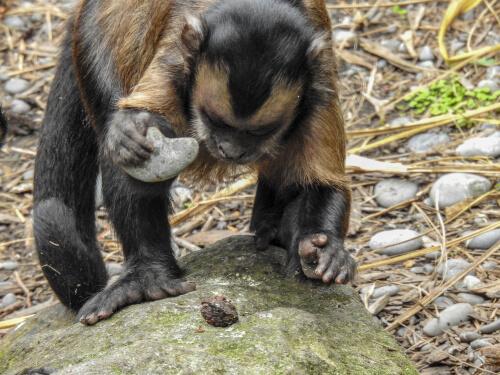 Monos que usan herramientas