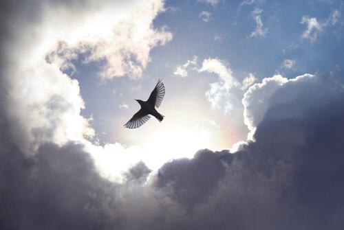 Pájaro volando entre las nubes