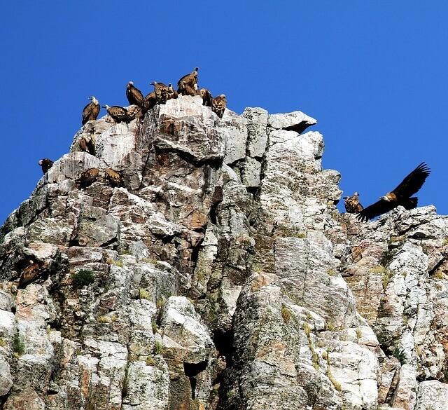 Espacios naturales protegidos: Parque nacional de Monfragüe