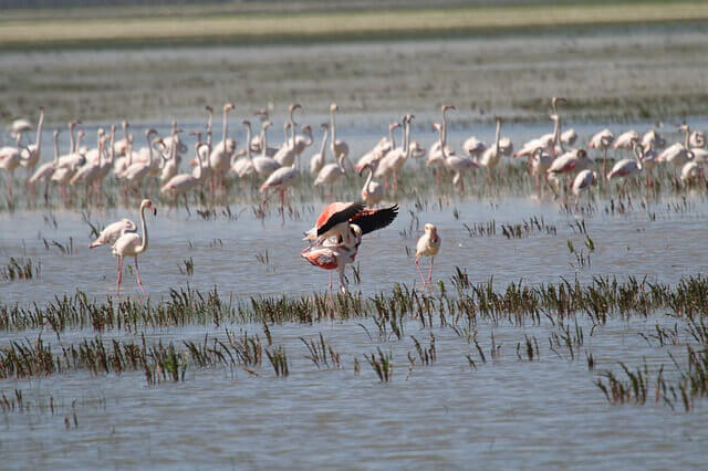 Parques naturales de España: Doñana