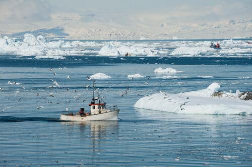 Peces en el ártico