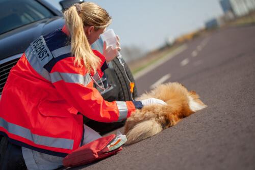 Perro en accidente de tráfico