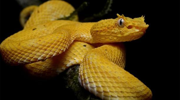 Conoce la isla de las serpientes
