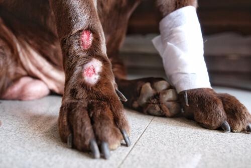 La manifestación del tétano en perros