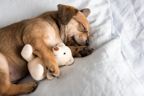 5 tips para ayudar a tu cachorro a dormir toda la noche