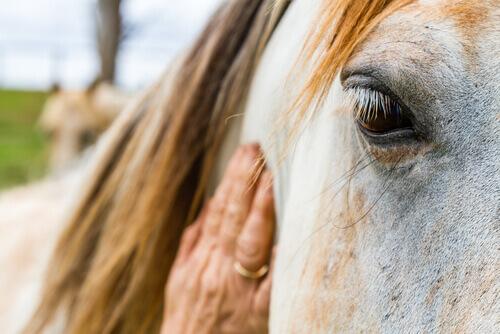 Los caballos pueden interpretar las expresiones y emociones humanas