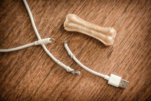 Cables mordisqueados por perro