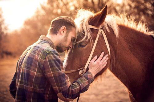 La empatía en los caballos: ¿pueden interpretar las emociones de otros animales?