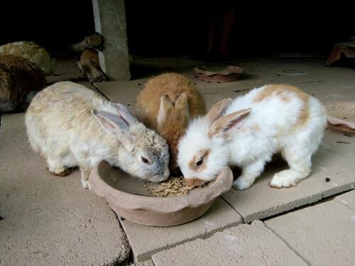 ¿Cuánto y cuándo debe comer un conejo?