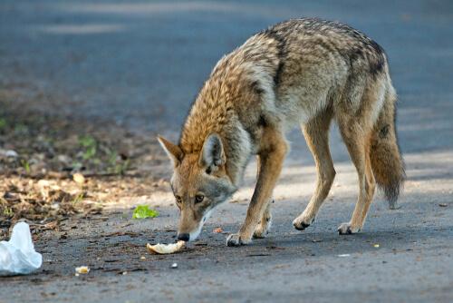 ¿Hay protección al maltrato de animales silvestres?