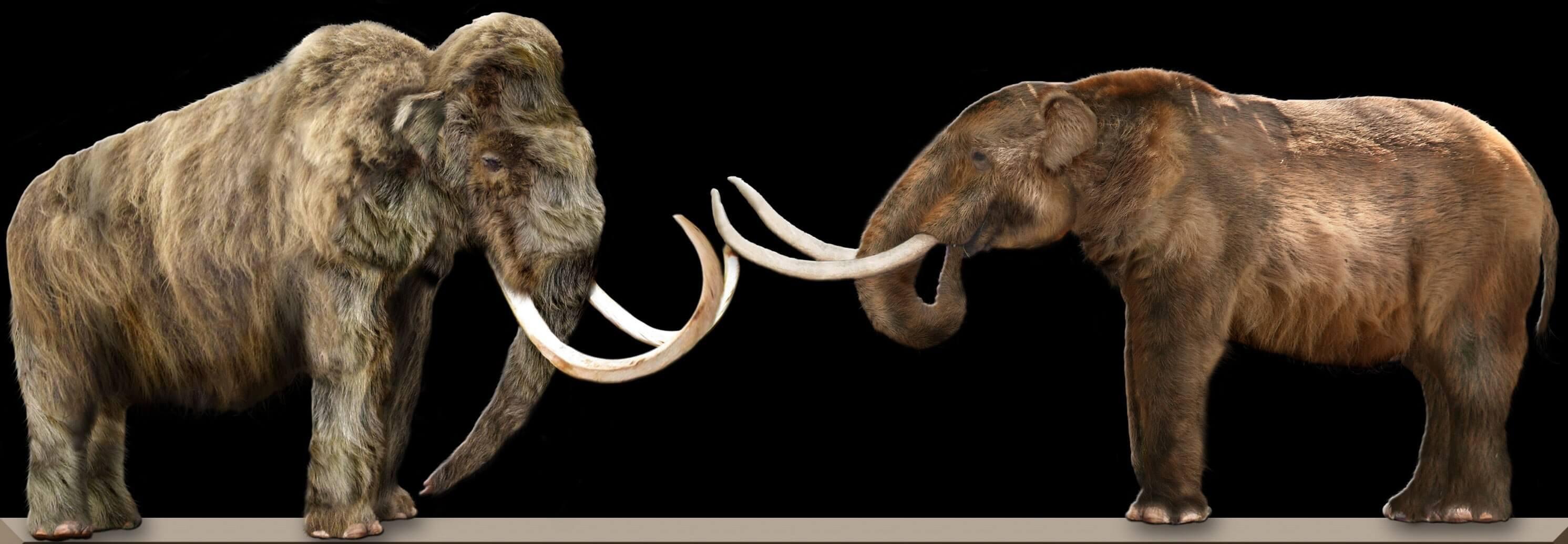 Diferencia entre mamut y mastodonte