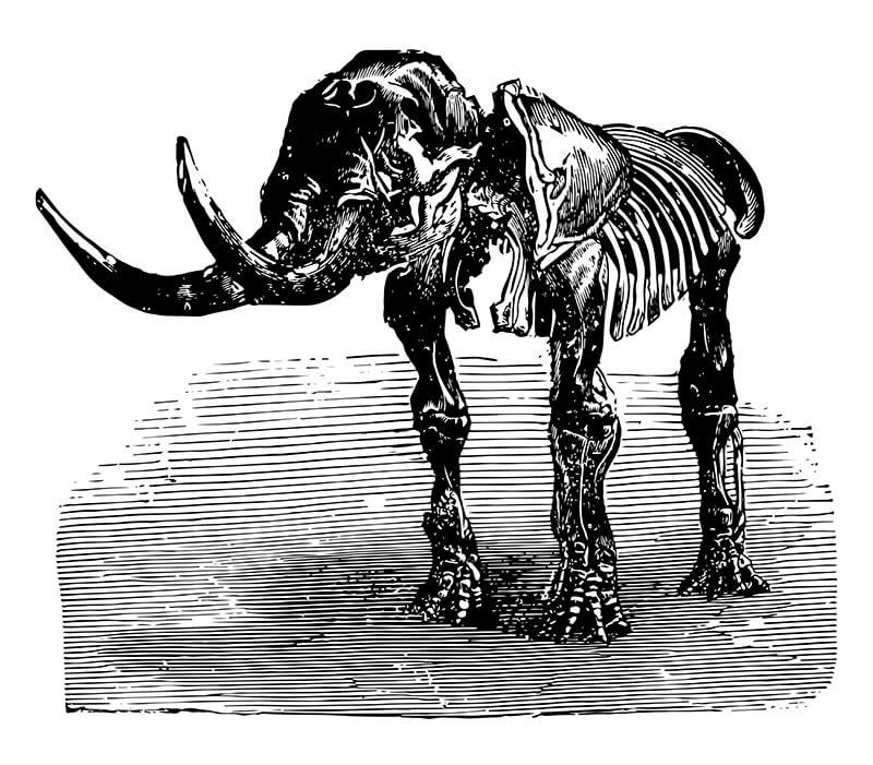 Esqueleto del mastodonte