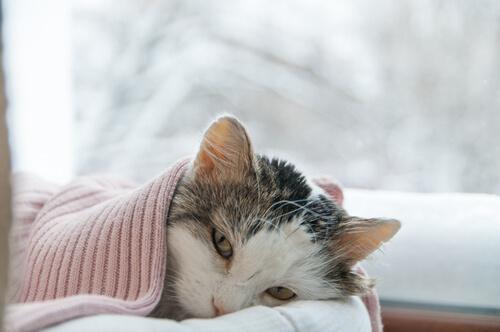 comida para gatos enfermos del estomago