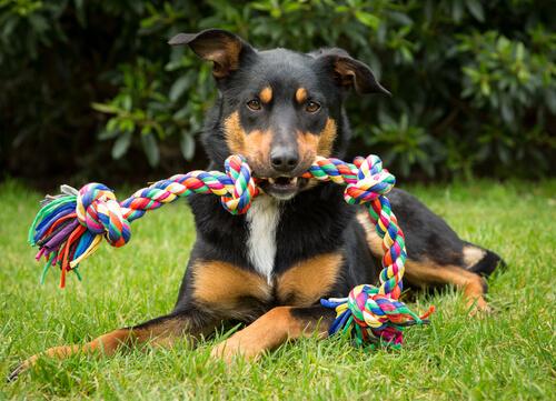 4 objetos o juguetes no adecuados para perros