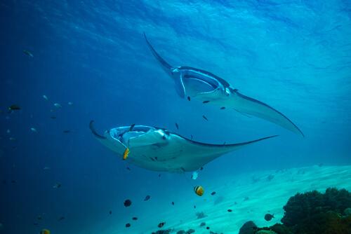 Las reservas marinas y las áreas protegidas