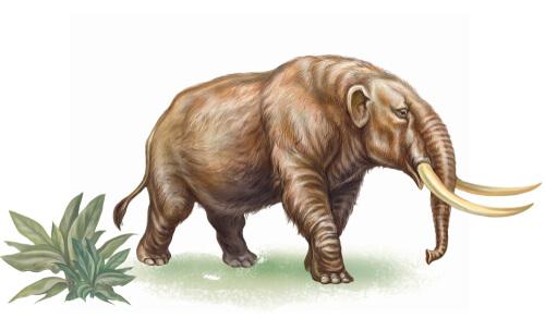 Conoce la historia del mastodonte extinto