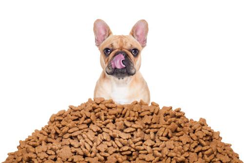 Cómo calcular mejor las porciones de comida de tu perro