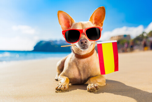 Perro con bandera de España representa al Derecho Animal