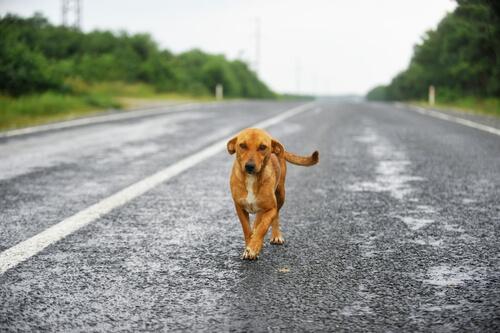 Perro deambulando por la carretera