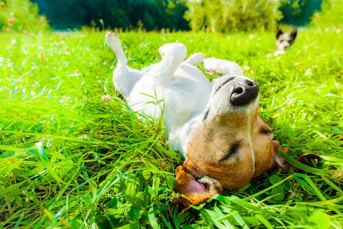 Perro relajado durmiendo