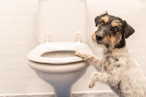 Un perro apoyado en un váter.