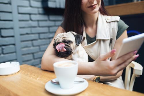Normativa para perros en establecimientos públicos