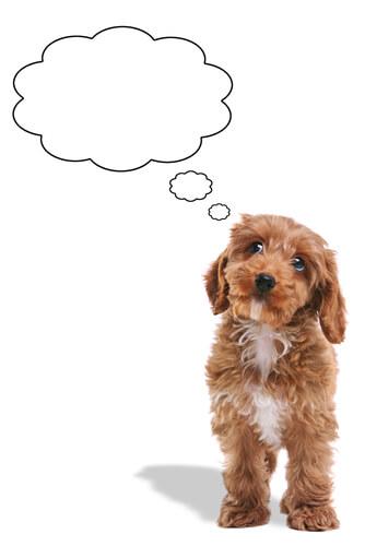 ¿Pueden los perros olvidarse de las personas?