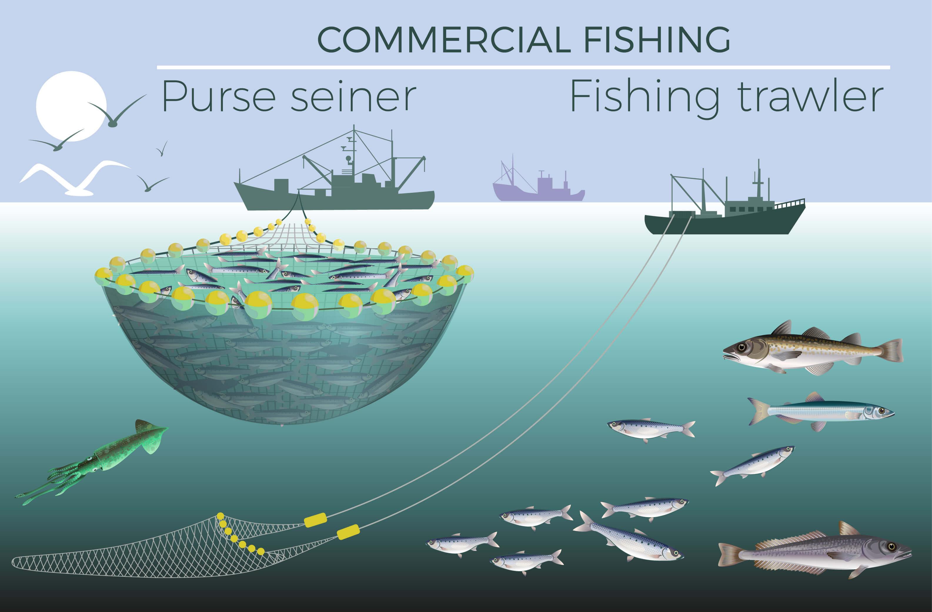 Pesca del lucio de mar
