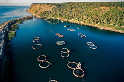 Piscifactoría del salmón