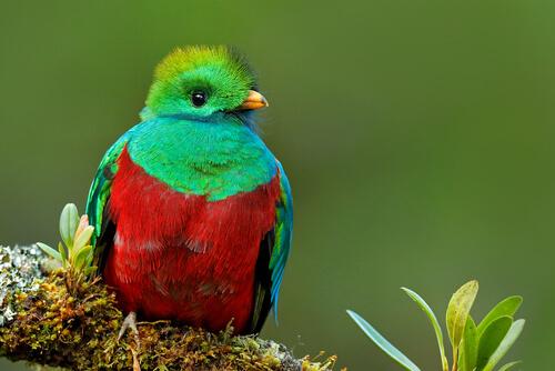 El quetzal: una hermosa ave misteriosa