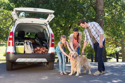 Transportar al perro en el coche