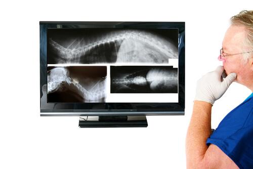 La enfermedad inflamatoria intestinal en perros puede detectarse con radiografías.