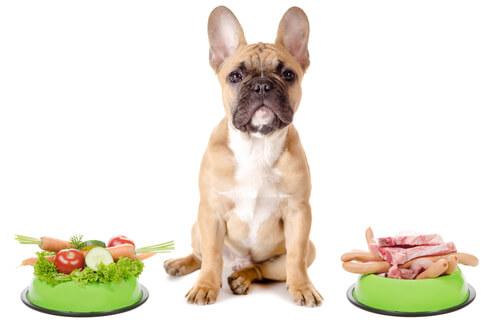 Alimentación del bulldog francés