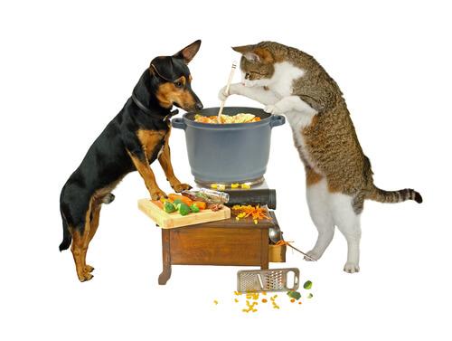Alimentación vegana en perros y gatos