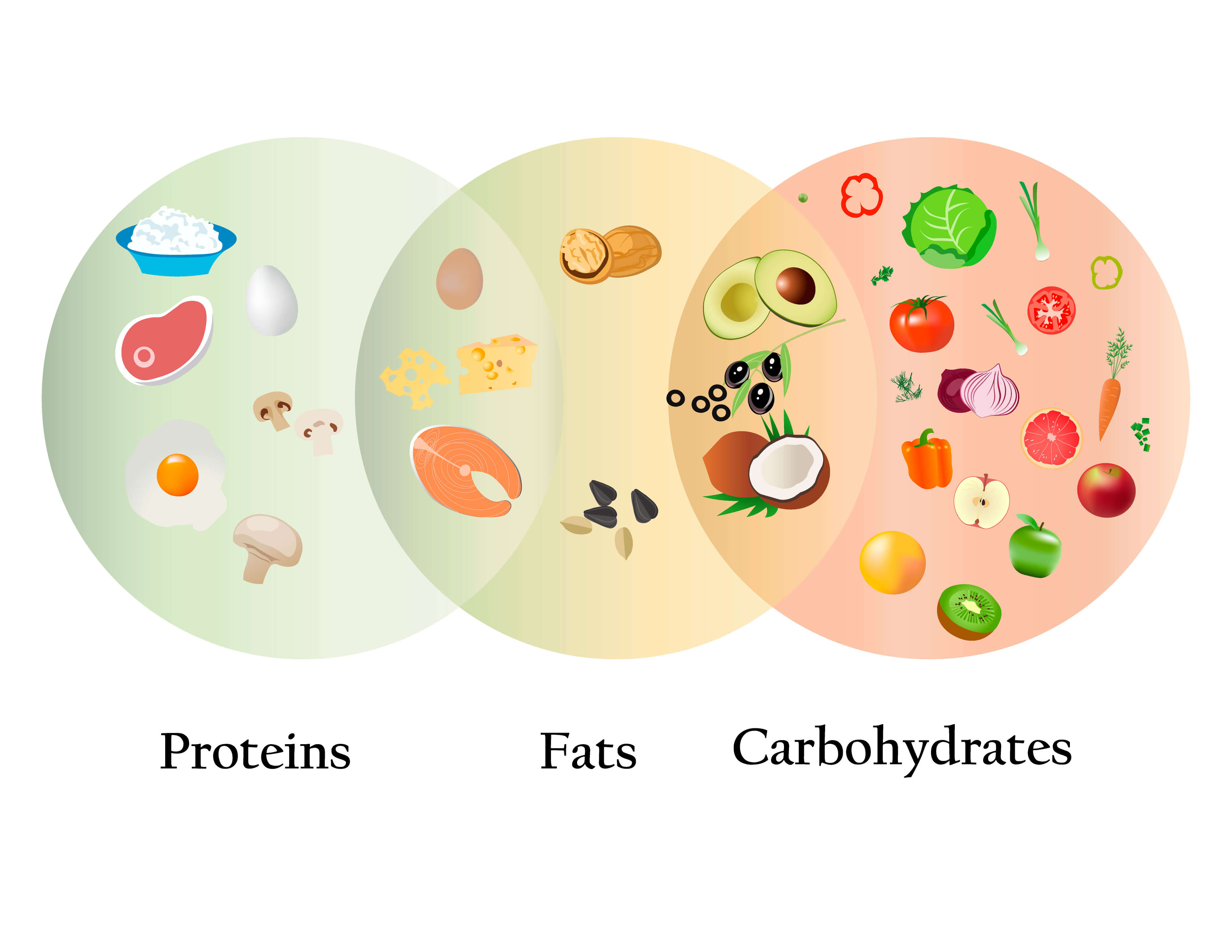 Alimentos que contienen proteínas, grasas y carbohidratos